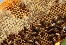 bee honeycomb, beekeeper