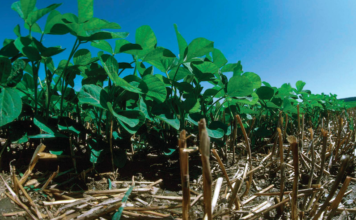 no-till soybeans - environmental stewardship award
