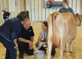 Celebrity Milking contest competitors Channel 2 Davis Nolan and Senator Delores Gresham