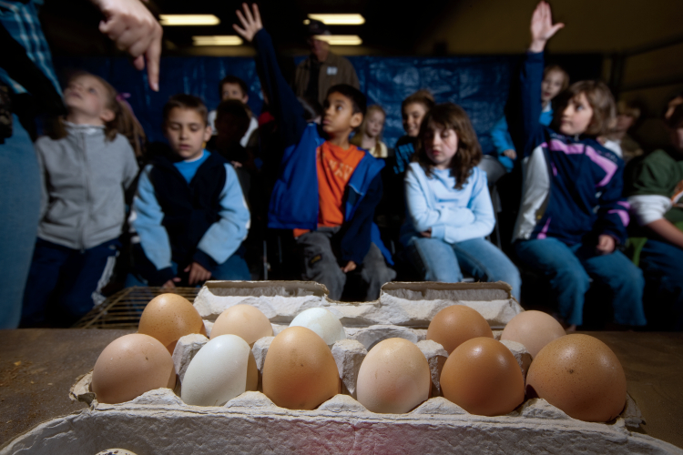 Putnam County first-graders are quizzed about the variety of different poultry eggs that are harvested from Thelma Cunningham's Cookeville farm, during a session about poultry at Hyder-Burks Ag Pavilion in Cookeville during the 2009 Farm Days event , sponsored by the Tennessee Farm Bureau and the Tennessee Tech. University. JCI Photo - J. Kyle Keener