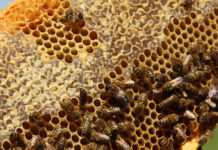 bee honeycomb, beekeeper
