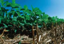 no-till soybeans - environmental stewardship award