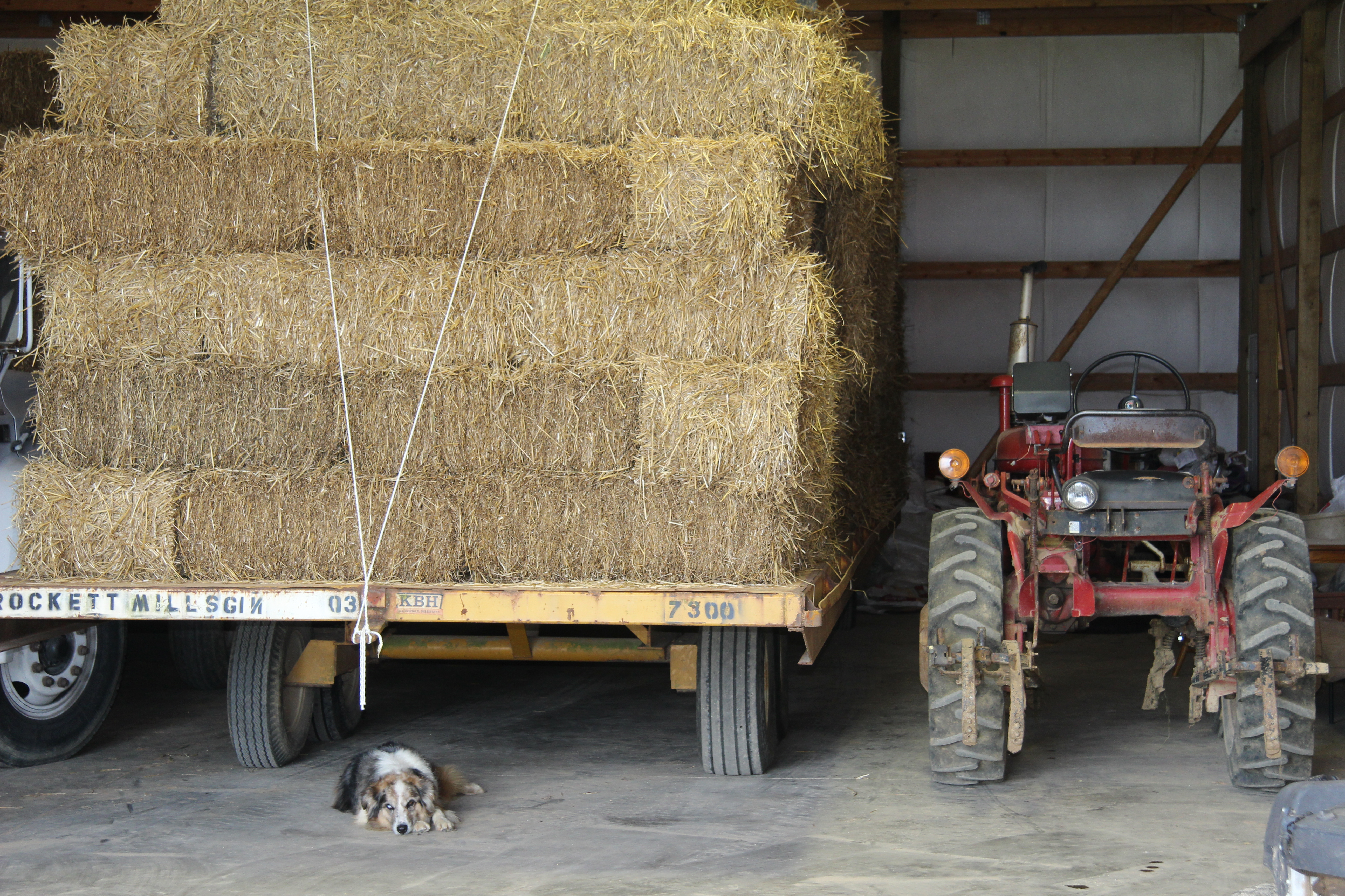 Ag Enhancement Program to Offer New Options for Farmers | Tennessee